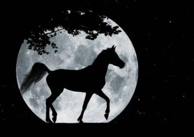 caballo con luna al fondo