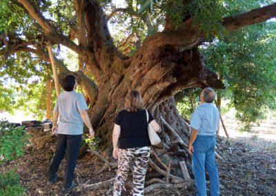 personas observando un árbol